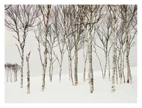 Picture: Josef Hoflehner 'Field Birches' (Japan, 2012)