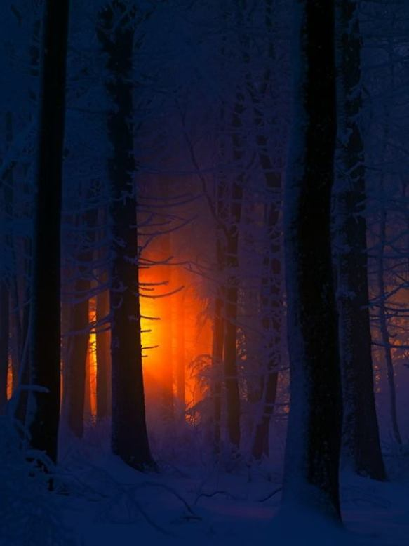 The beauty of winter - Stephan Amm